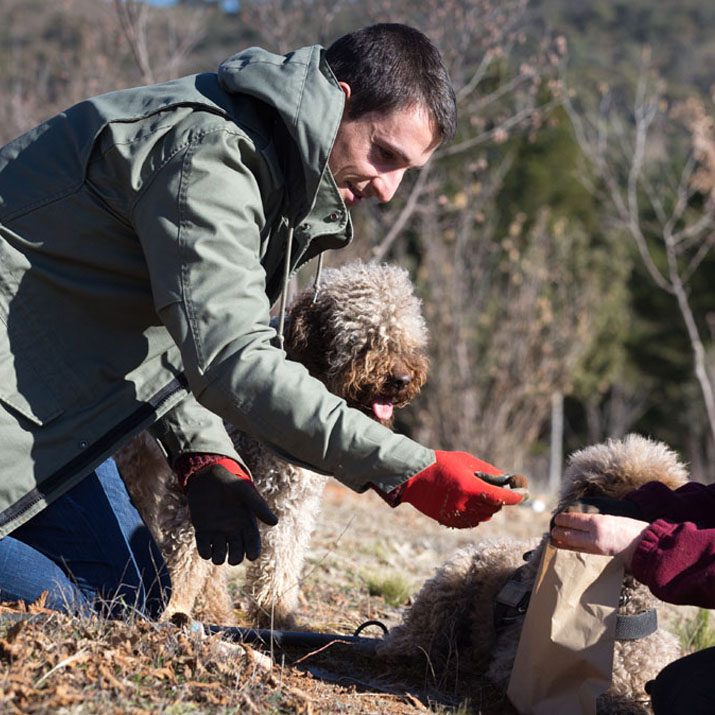 Photo of a truffle being excavated