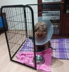 Fahren in the cone of shame