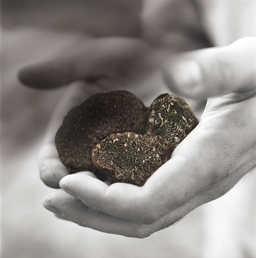 Our first Black truffles